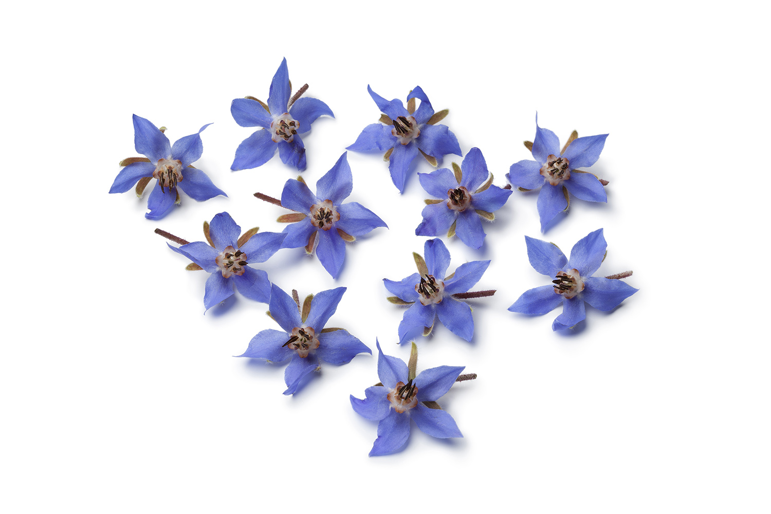 RIWAY's PURTIER Health Supplement Ingredient - Borage Oil, 干细胞胎盘素保健品成分 - 琉璃苣油